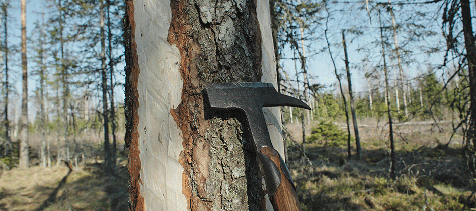 slideshow_norway_forestry_0000s_0013.png