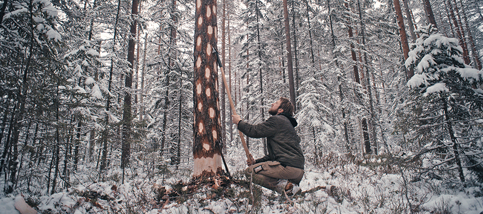 slideshow_norway_forestry_0000s_0014.png