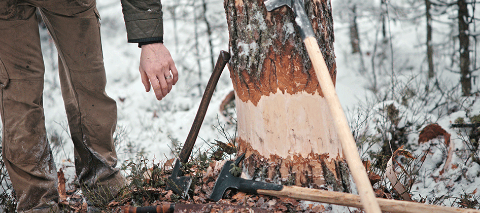 slideshow_norway_forestry_0000s_0015.png