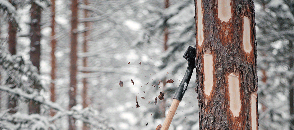 slideshow_norway_forestry_0000s_0017.png